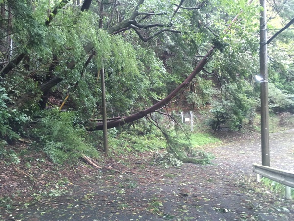 厚木霊園倒木